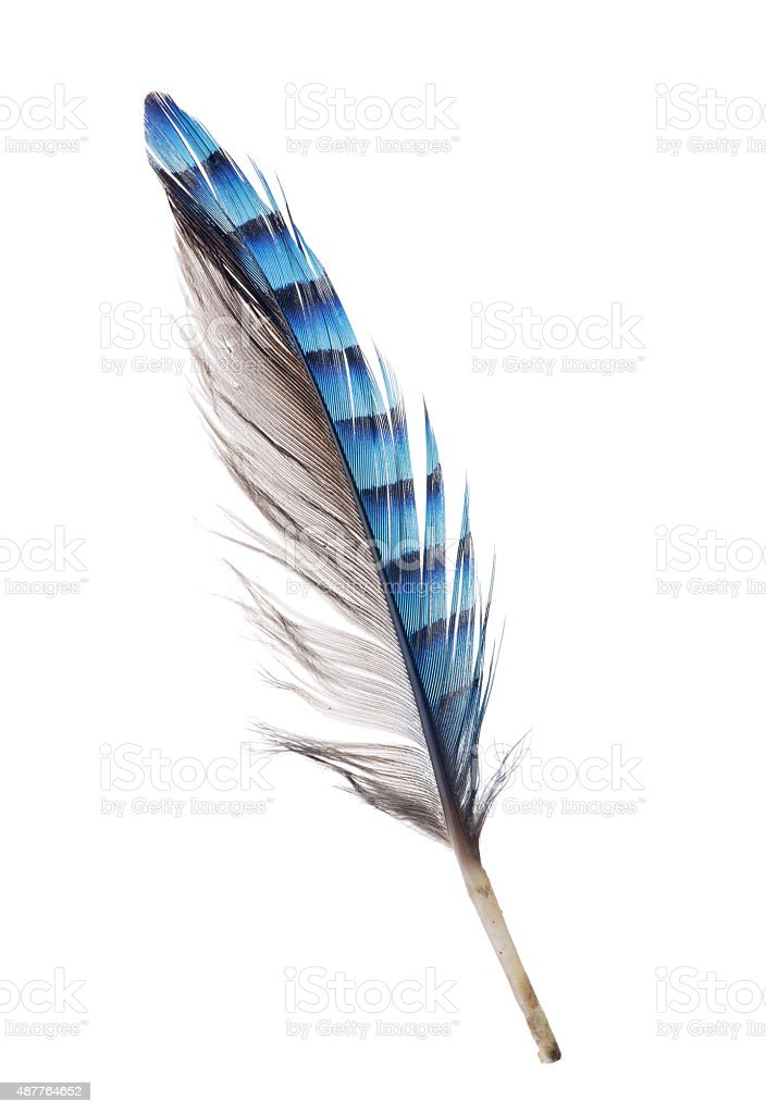 feather with blue striped and grey sides stock photo
