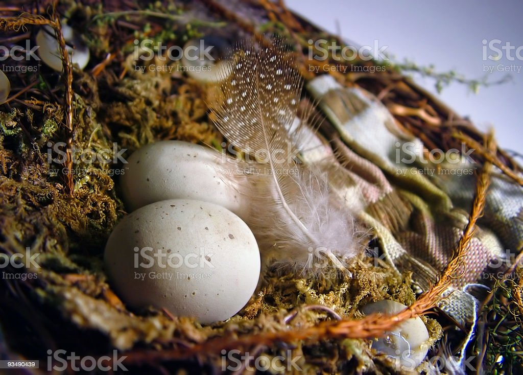 Feather Your Nest royalty-free stock photo