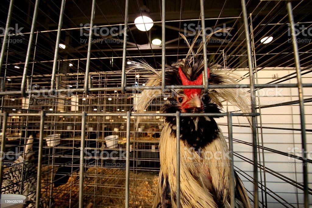 Featherdo stock photo