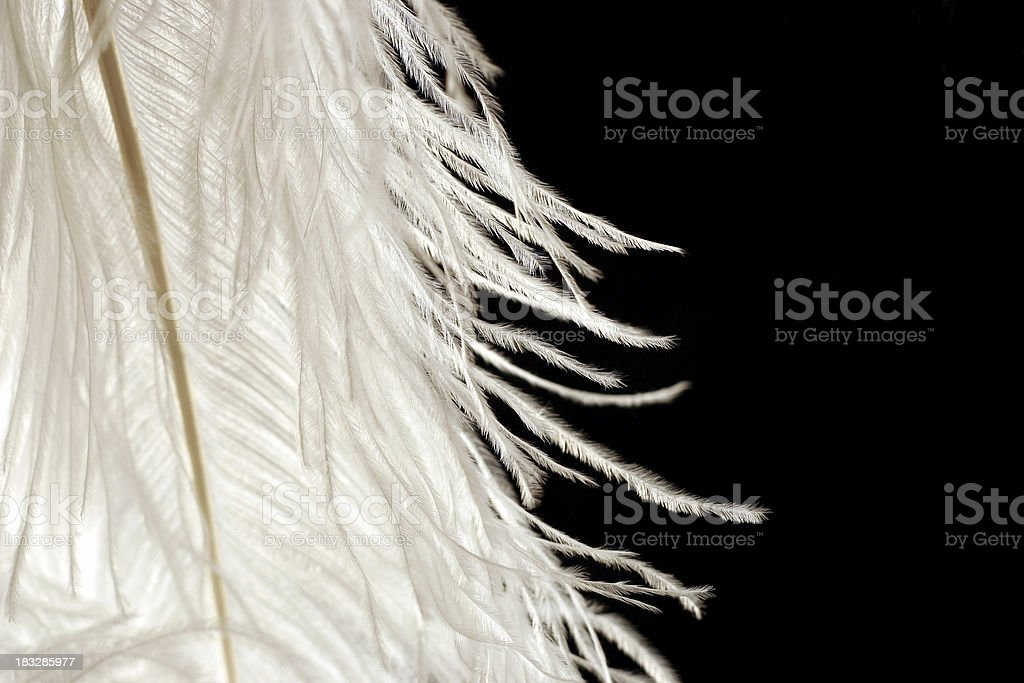 feathered edge royalty-free stock photo