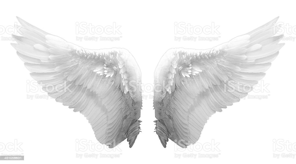Feathered White Angel Wings On White Background stock ...