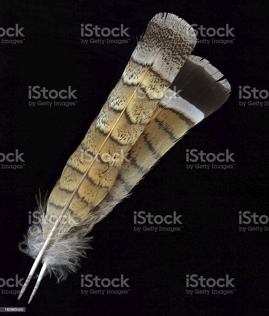 Feathers 2 royalty-free stock photo