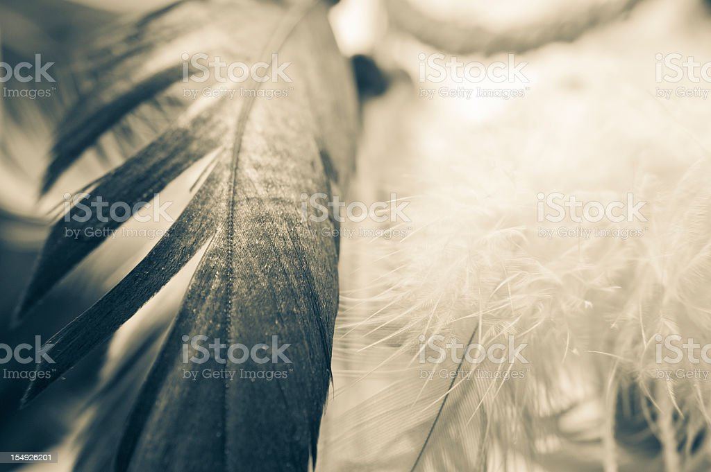 Feathers Abstract Background Of A Dreamcatcher stock photo
