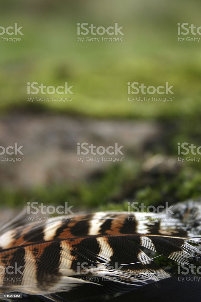 Feathers - Abstract royalty-free stock photo