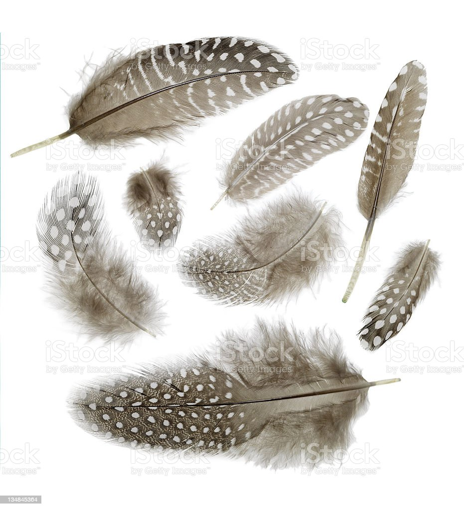 Feathers backgrounds stock photo