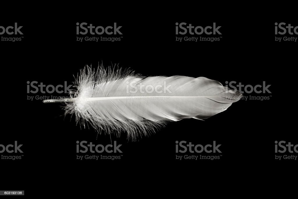 Feathers in the dark.   Can be used for presentations, calendar stock photo
