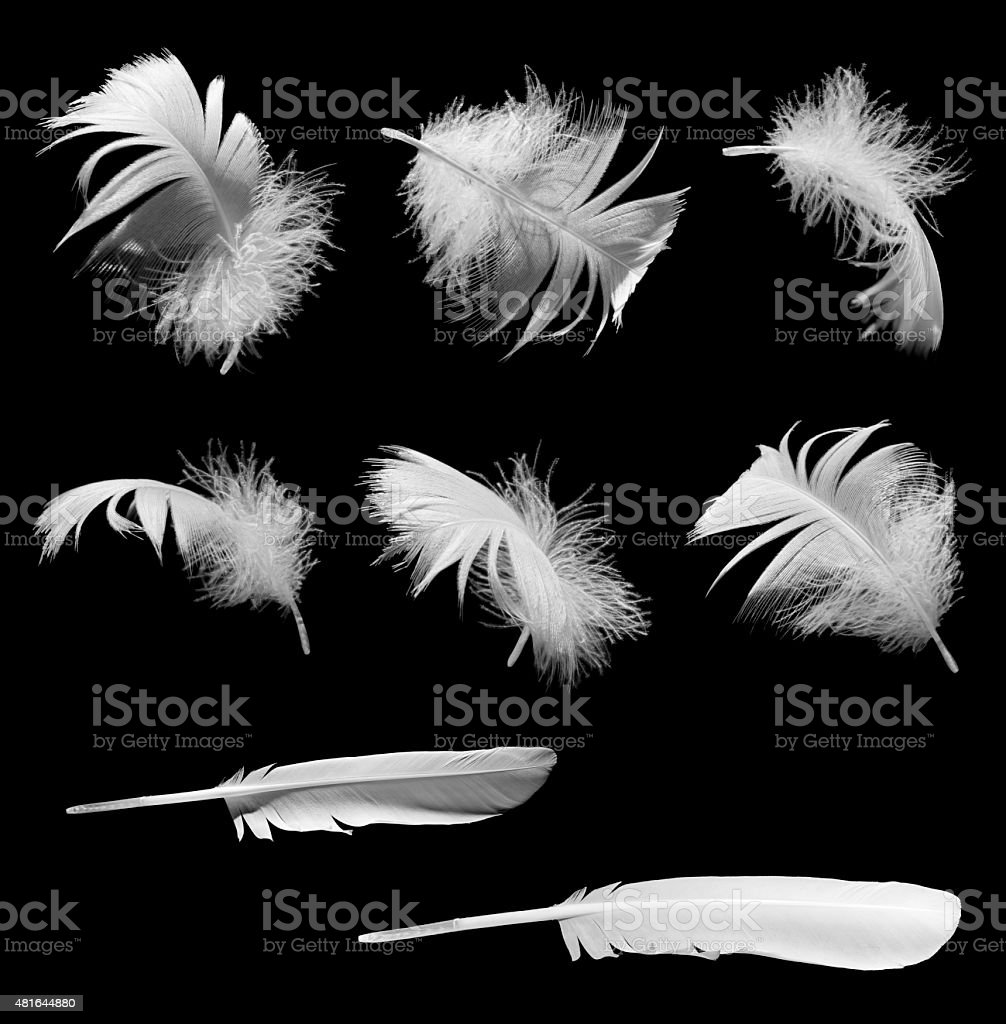 Feathers isolated on black background stock photo