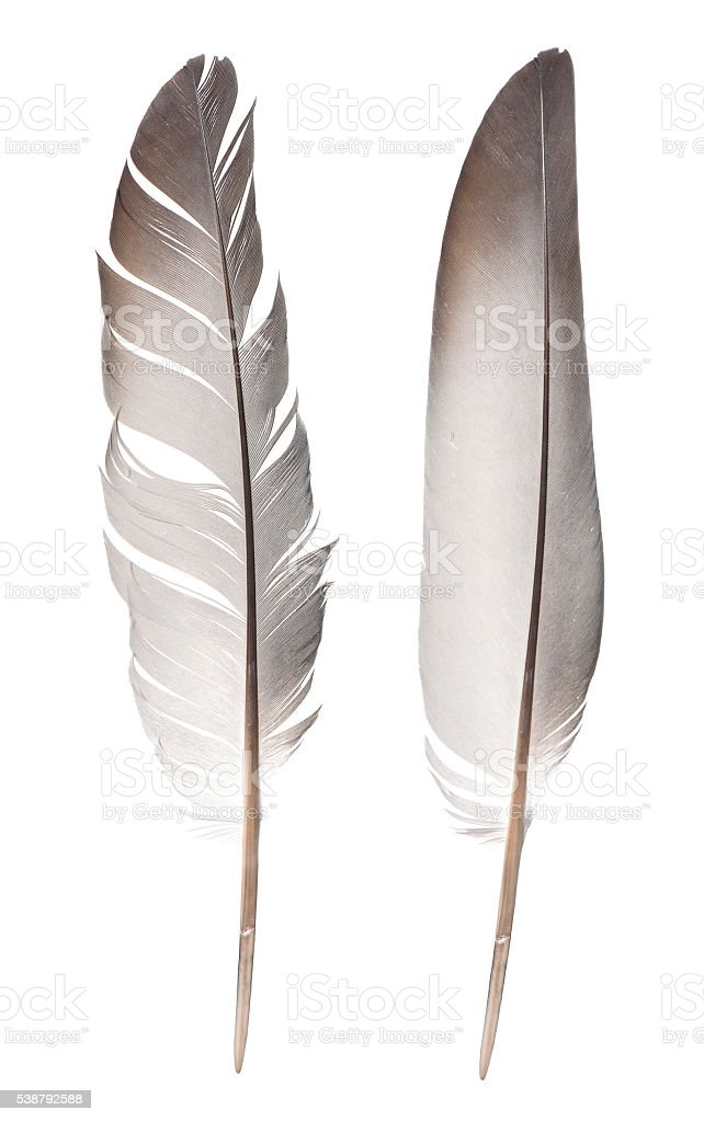 feathers isolated on white stock photo