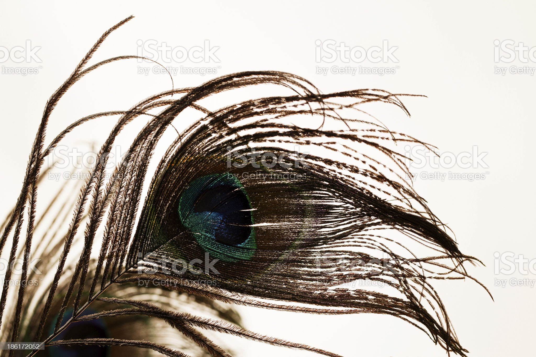 Feathers of peacock royalty-free stock photo