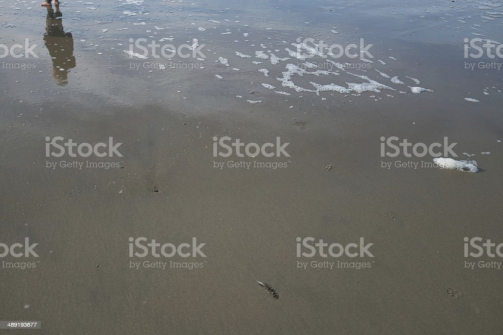 feathers on the beach stock photo