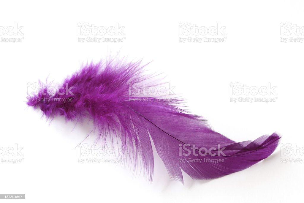 Feathers royalty-free stock photo