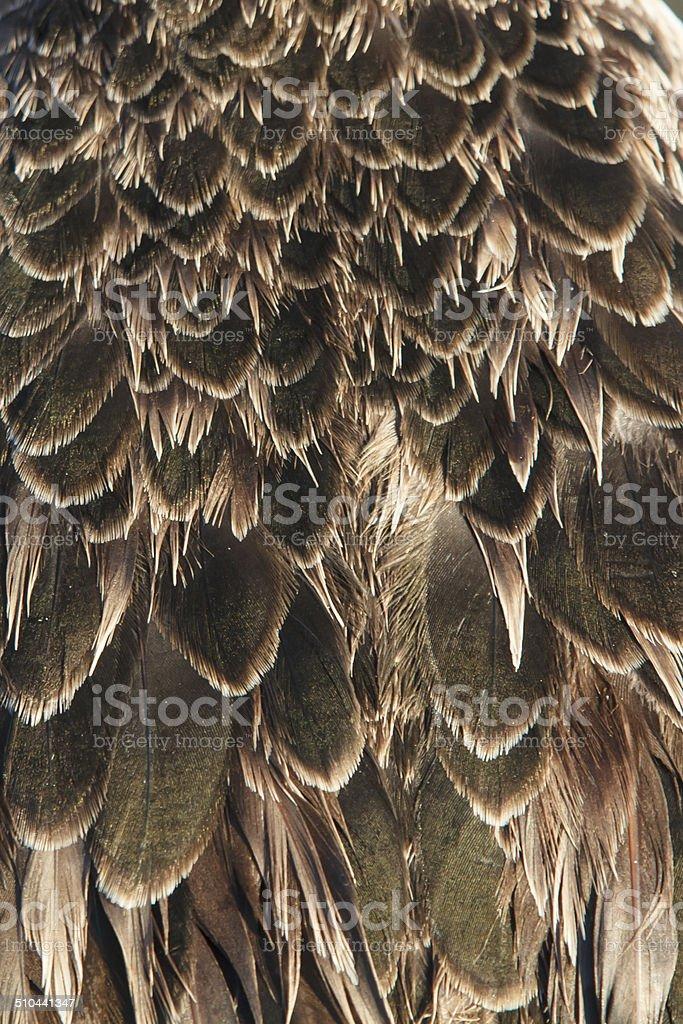 Feathers stock photo
