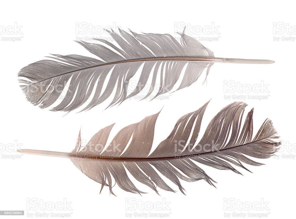 feathers set stock photo
