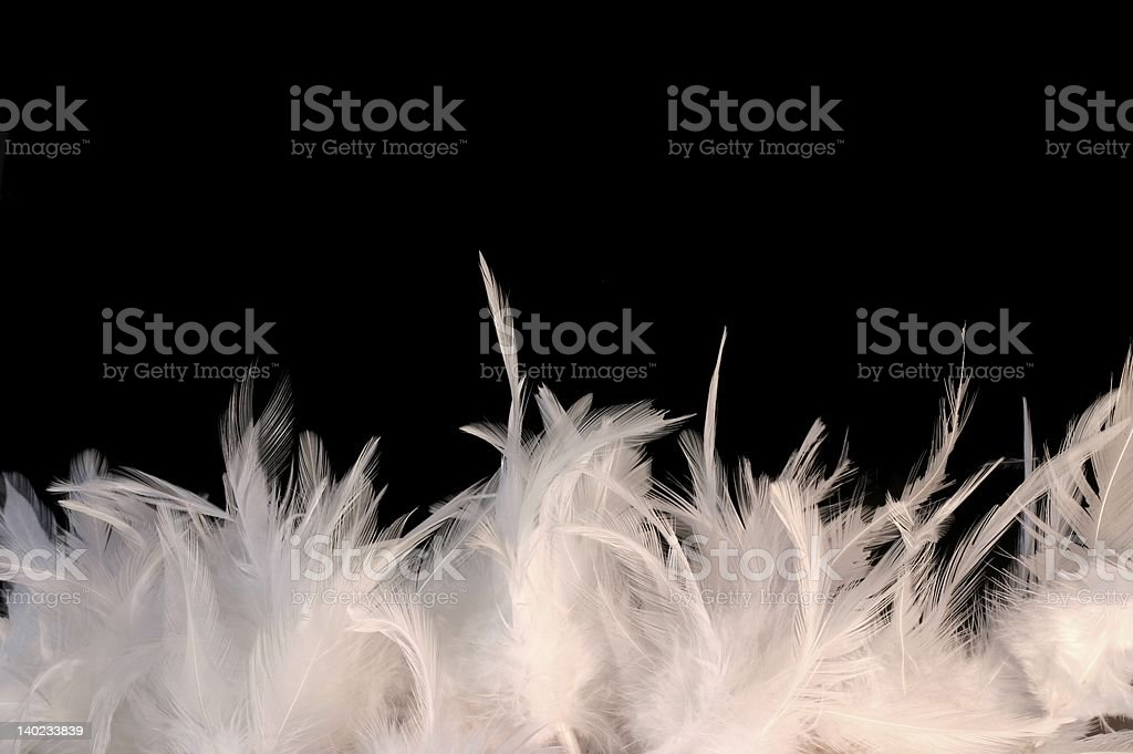 Feathery border stock photo