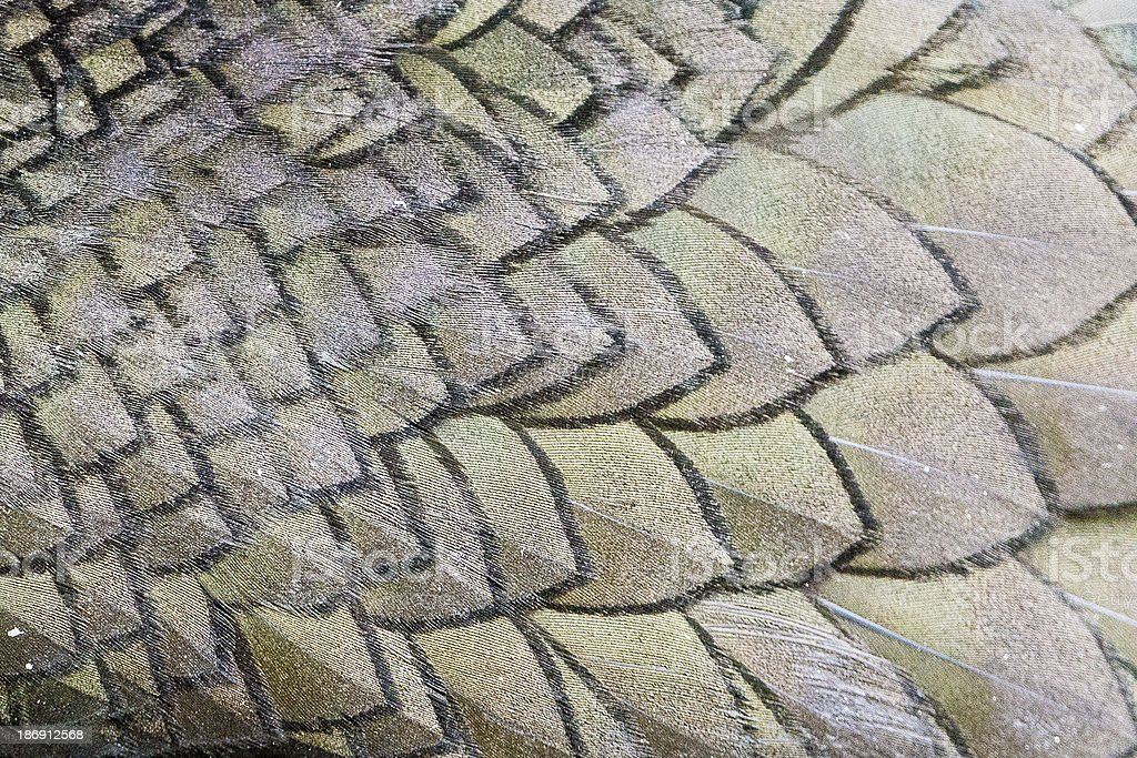 Feature pattern from Shag (Farne Islands, UK) royalty-free stock photo