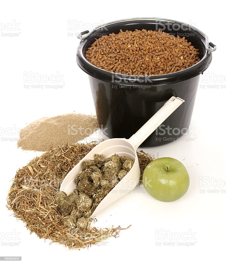 Feed For Your Horse stock photo