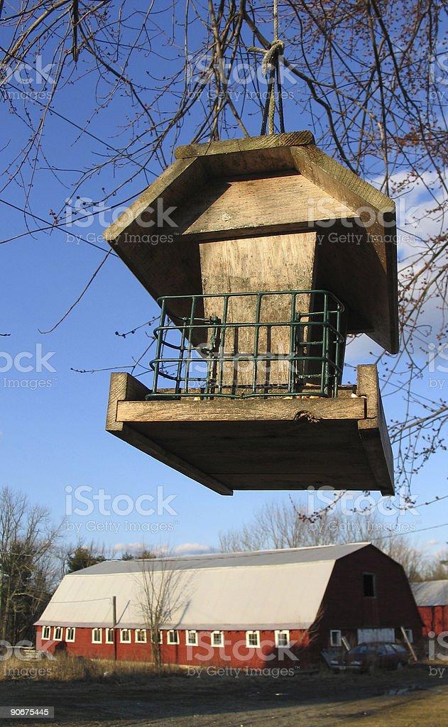 Feed the Birds (Spring) royalty-free stock photo