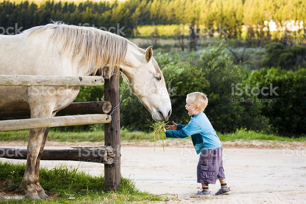 Feeding a horse stock photo