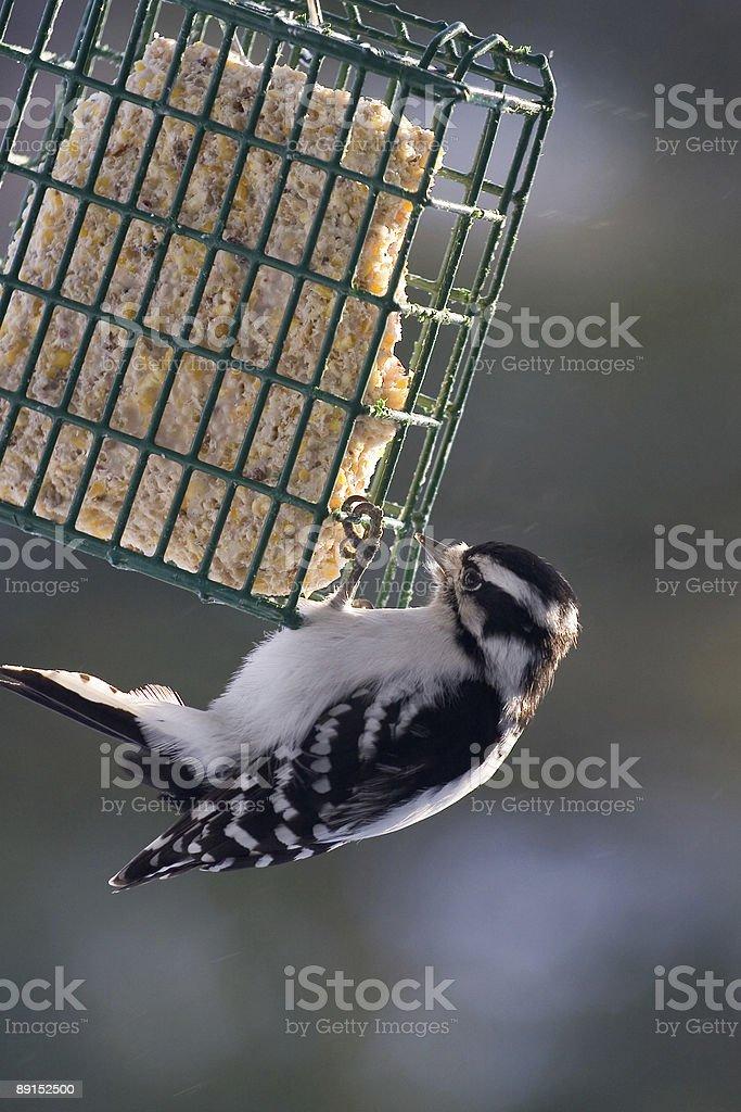feeding bird stock photo