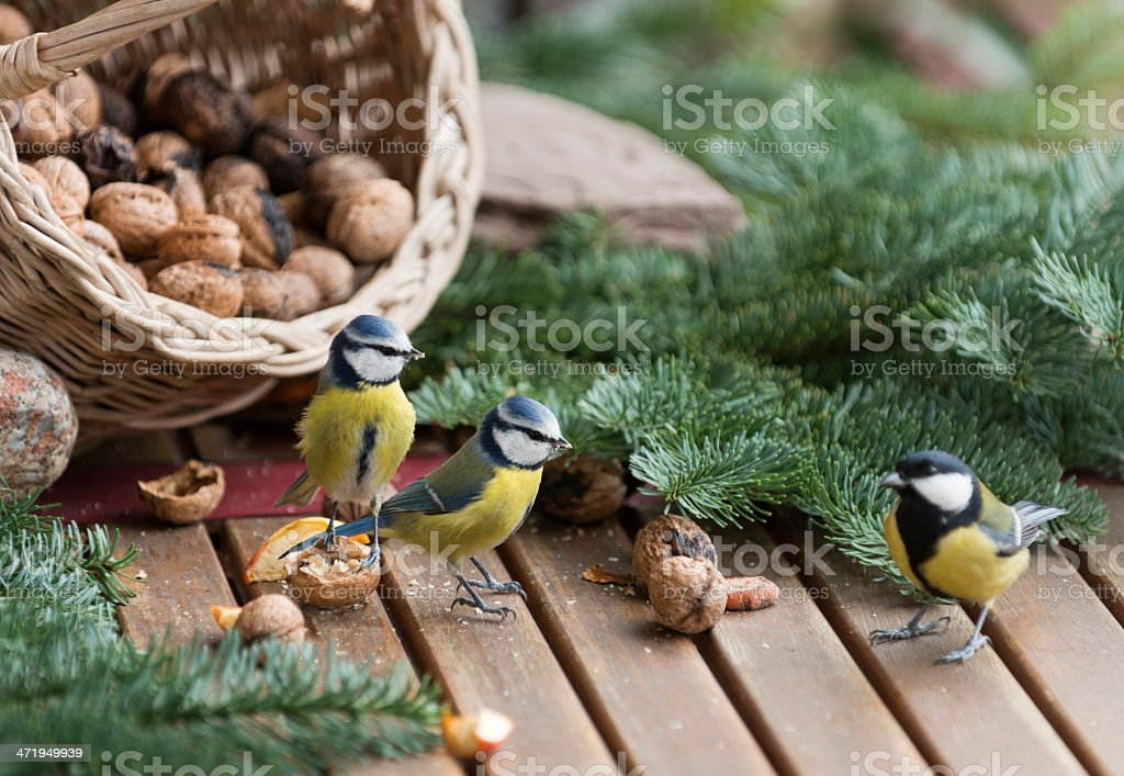 Feeding Birds in Winter stock photo