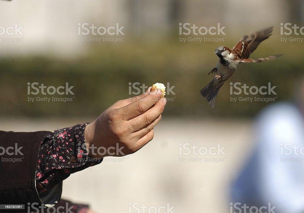 Feeding Birds royalty-free stock photo