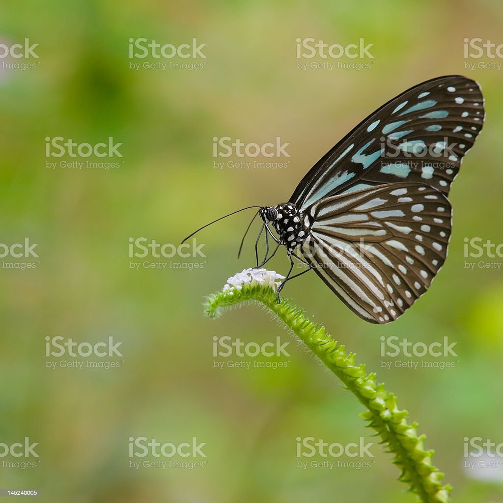 Feeding Butterfly stock photo