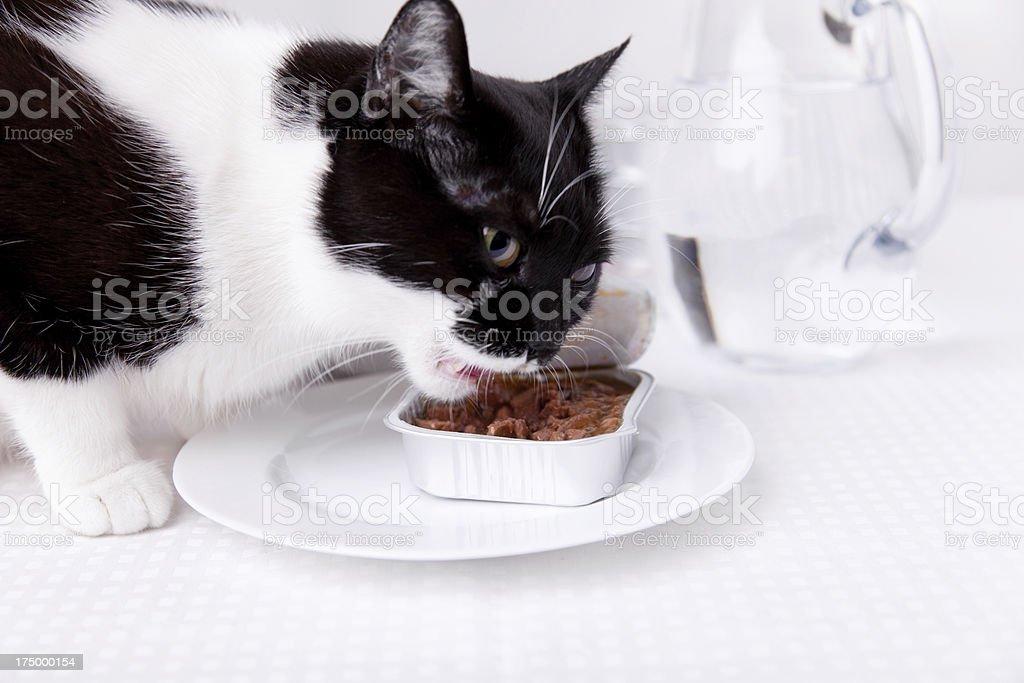 feeding cat on table royalty-free stock photo
