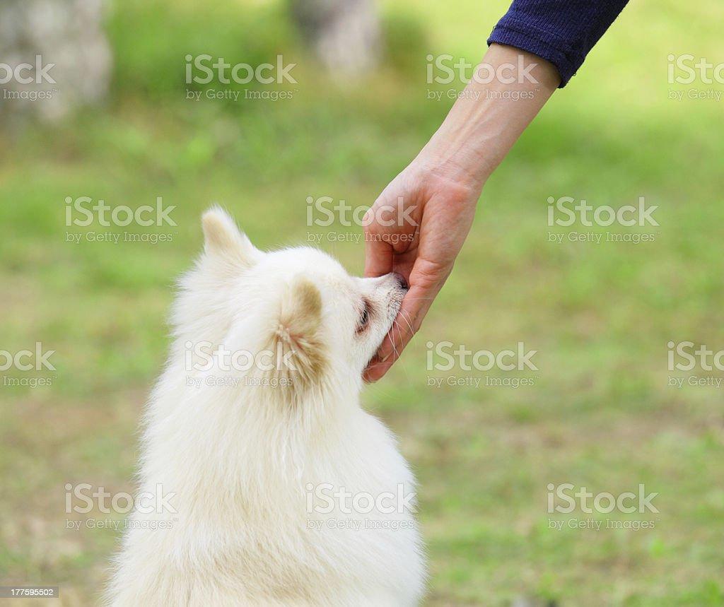 Feeding dog stock photo