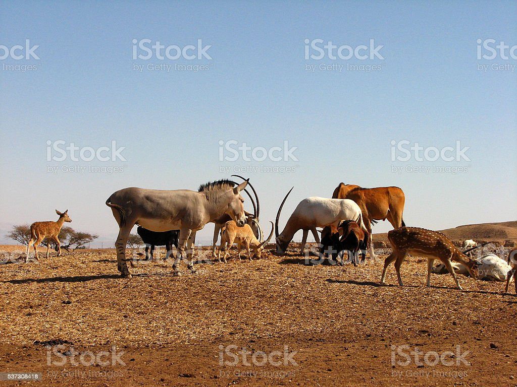 Feeding Frenzy stock photo