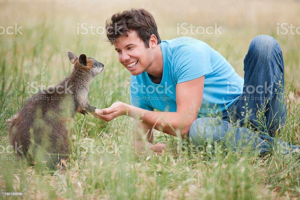 Feeding Kangaroos in the Wild (XXXL) stock photo