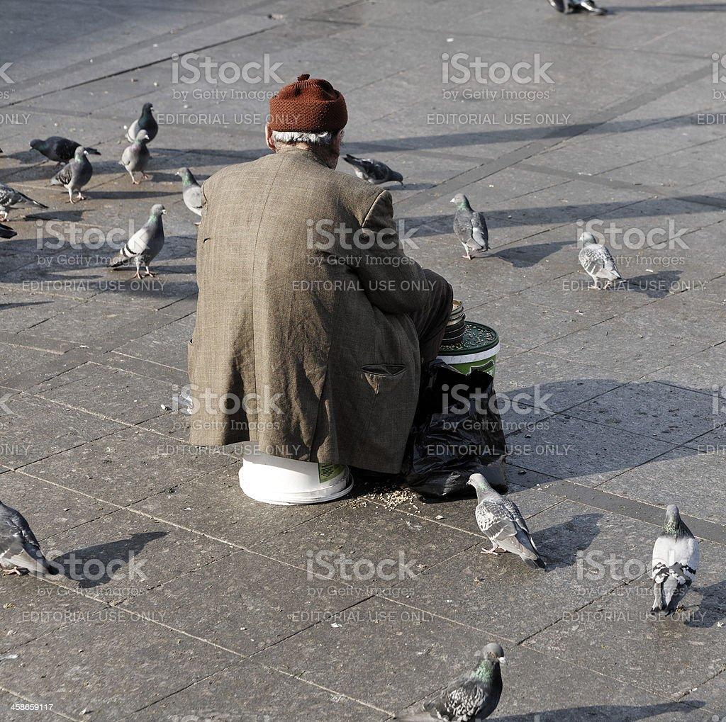Feeding Pigeons. stock photo