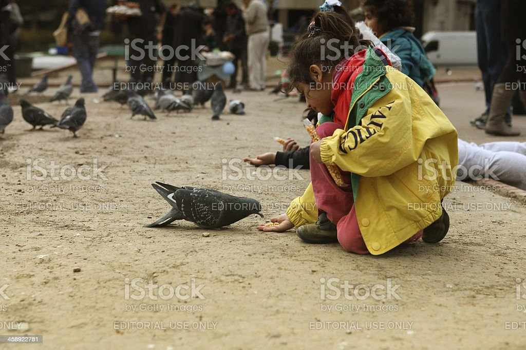 feeding pigeons royalty-free stock photo