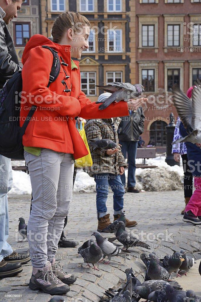 Feeding pigeons royalty-free stock photo