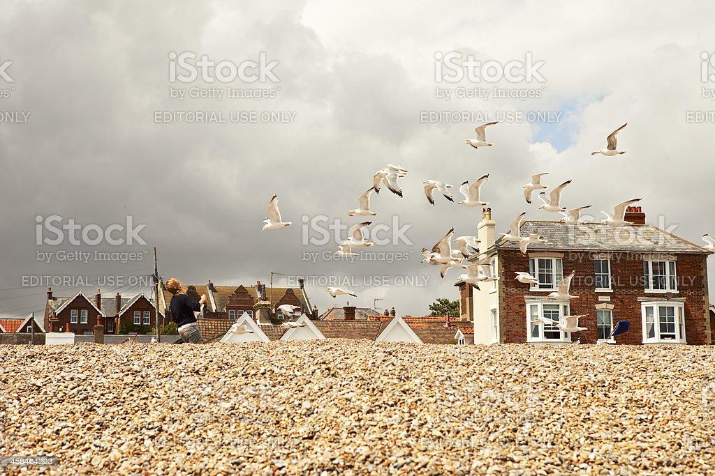Feeding sea gulls fish and chips on beach stock photo