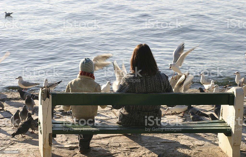 Feeding seagulls royalty-free stock photo