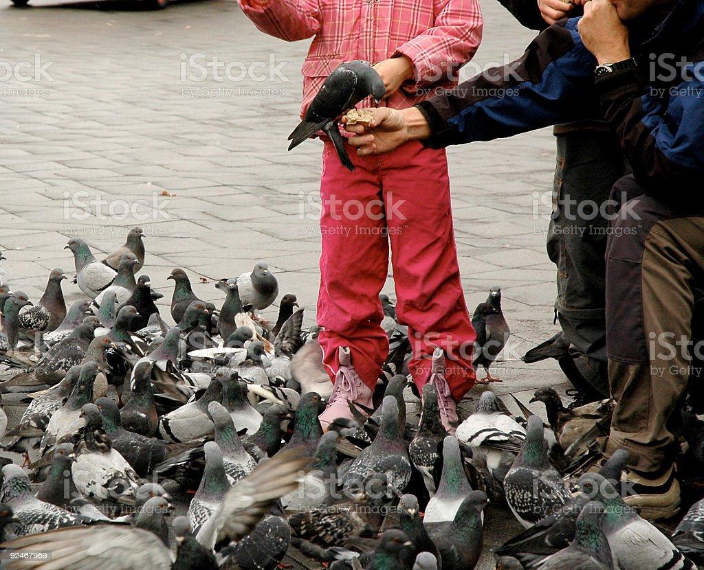 Feeding the Birds stock photo