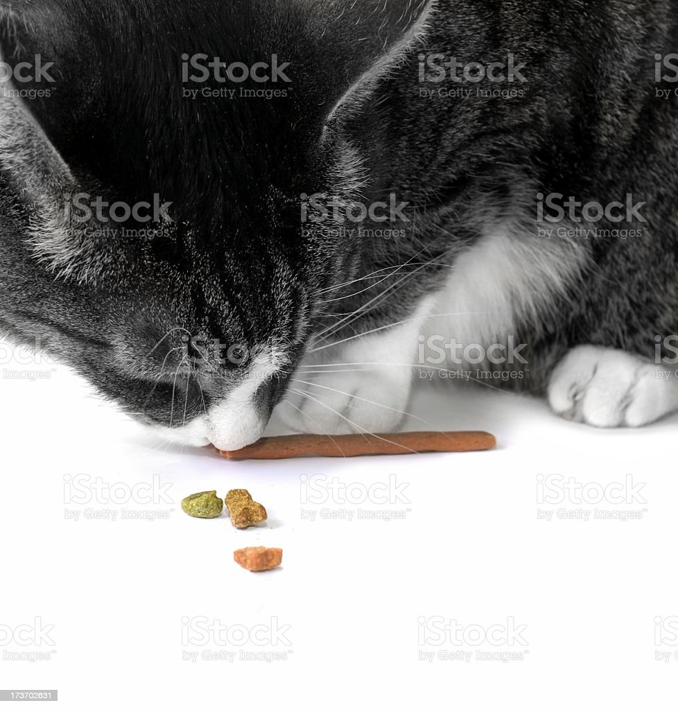 feeding the cat royalty-free stock photo