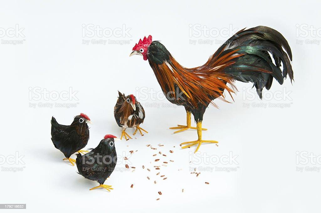 Feeding the chickens royalty-free stock photo
