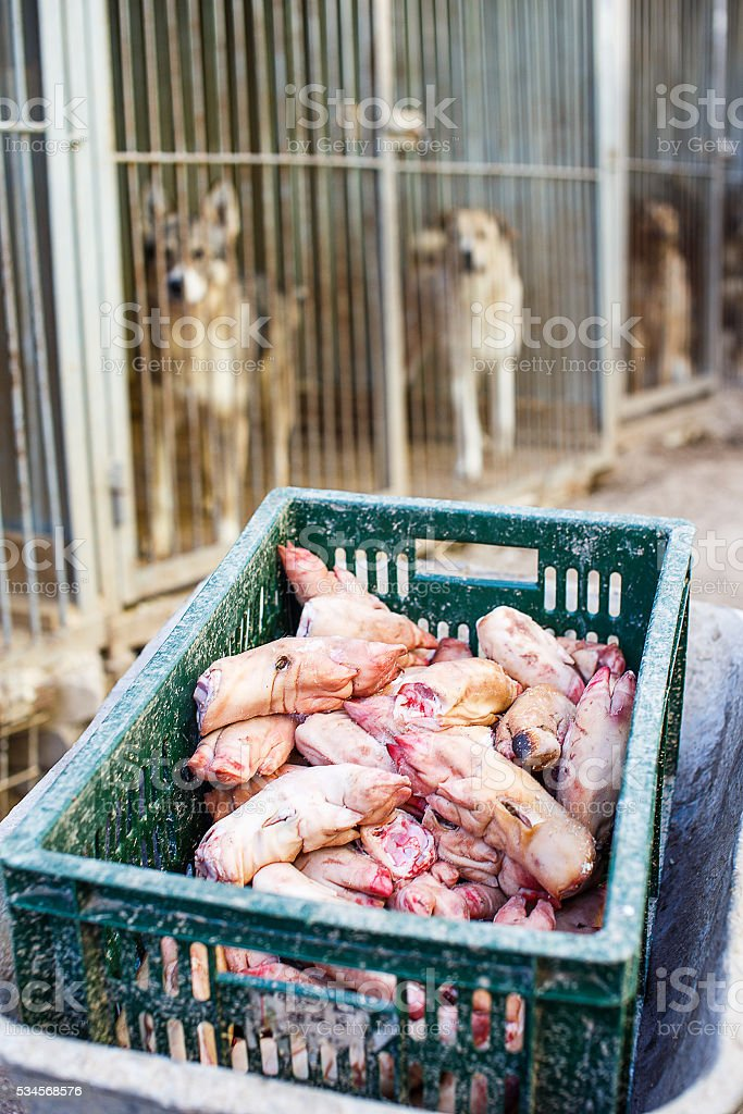 feeding the dogs at the shelter stock photo