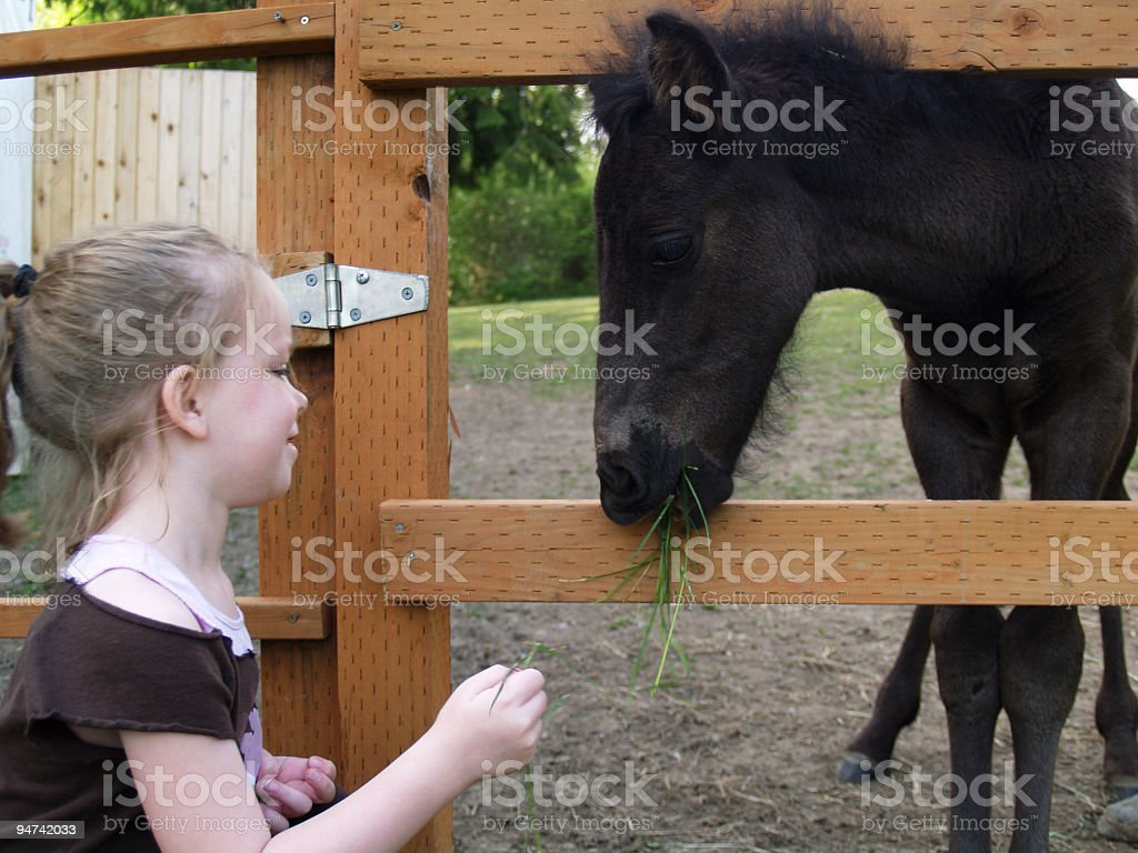 Feeding the Foal royalty-free stock photo