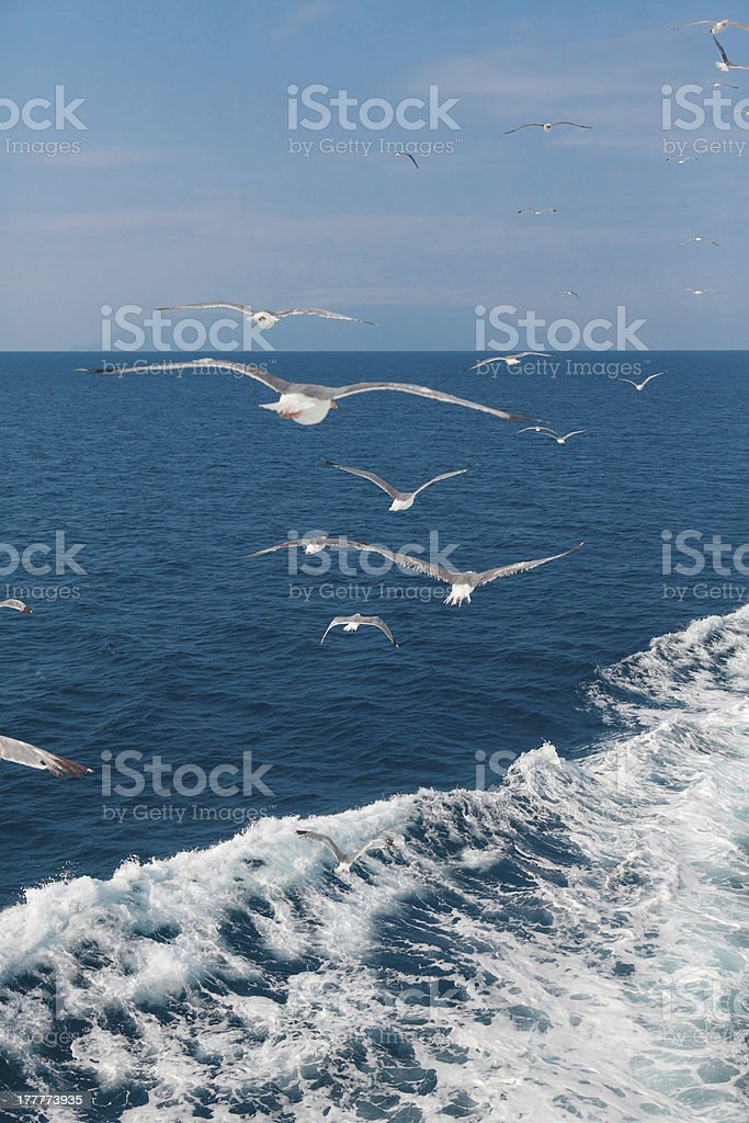 Feeding the gulls by hand royalty-free stock photo