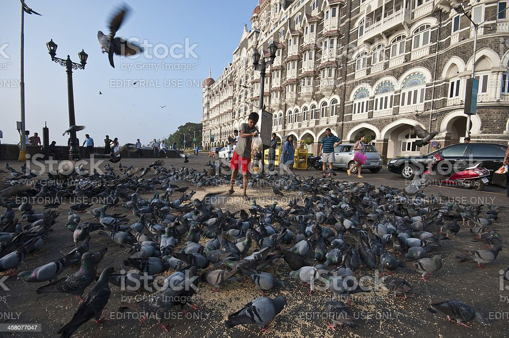 Feeding the pigeons royalty-free stock photo