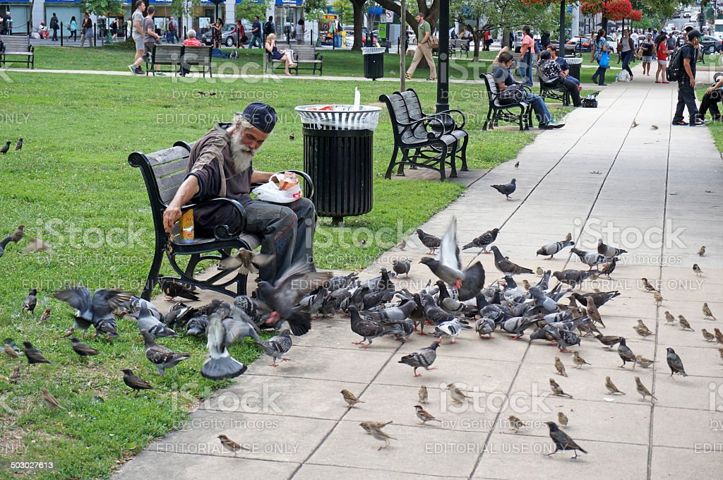 Feeding the Pigeons stock photo