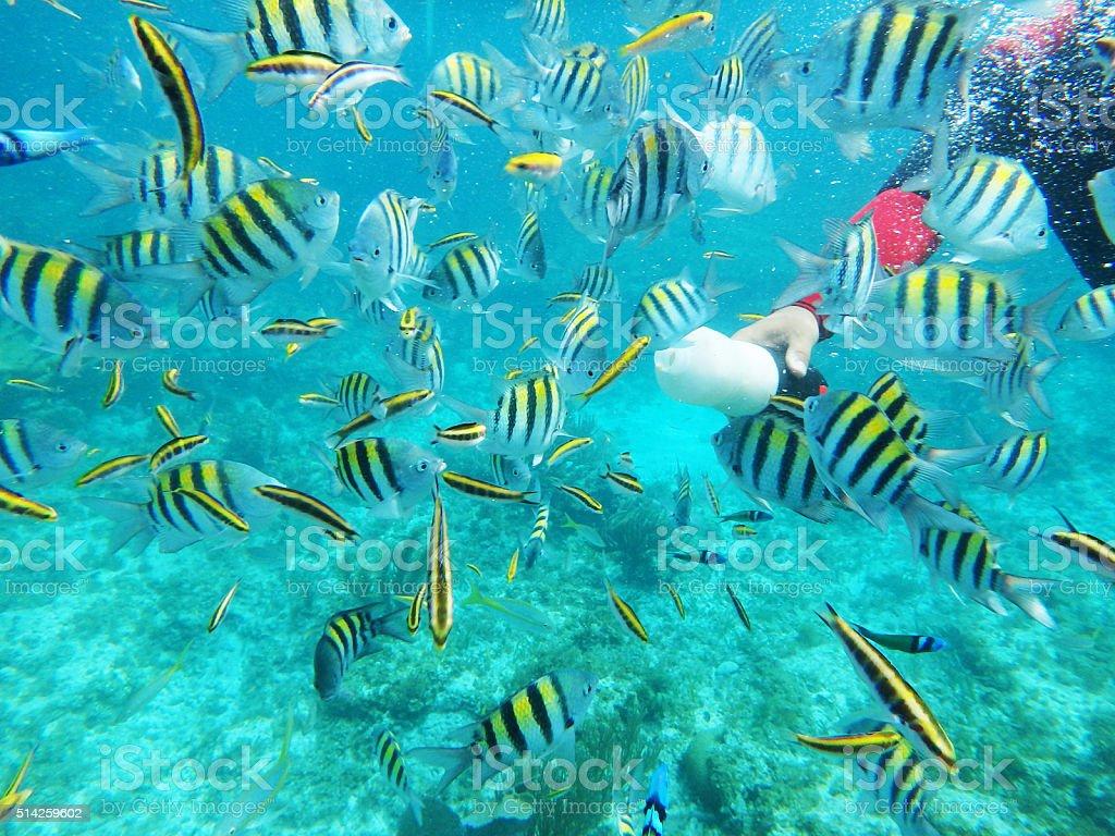 Feeding the Reef Fish underwater stock photo