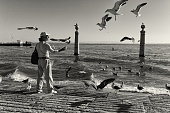 Feeding the Seagulls in Lisbon