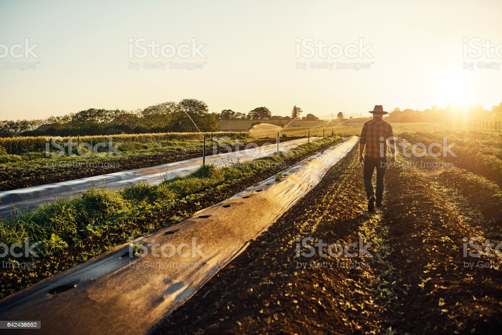 Feeding the world one seedling at a time stock photo