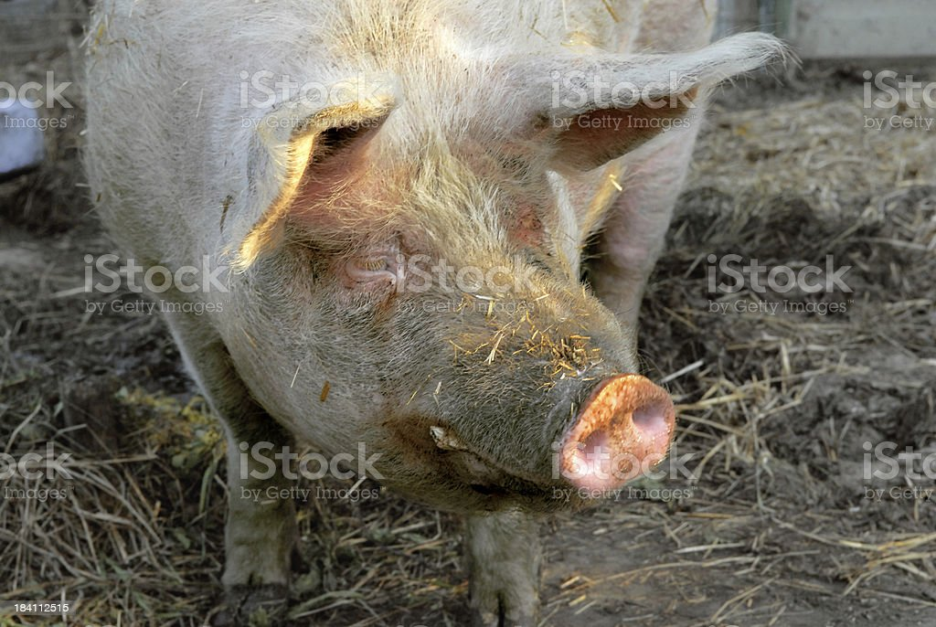 Feeding time again?! royalty-free stock photo