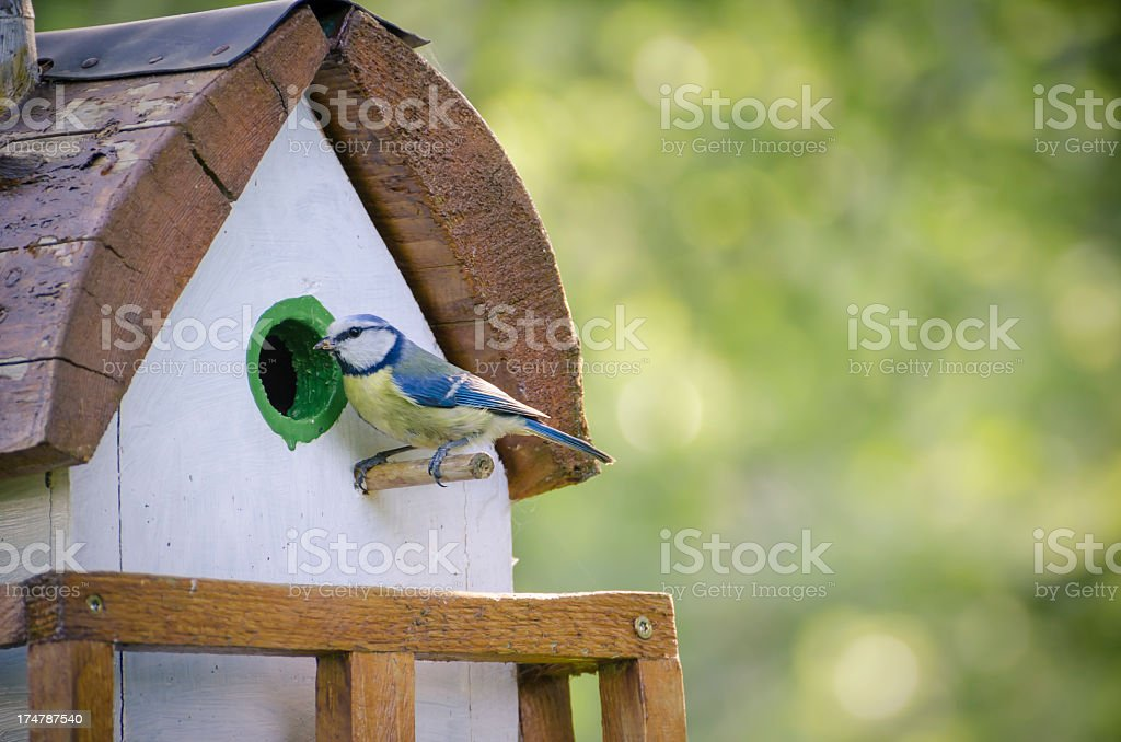 feeding time at the bird house stock photo