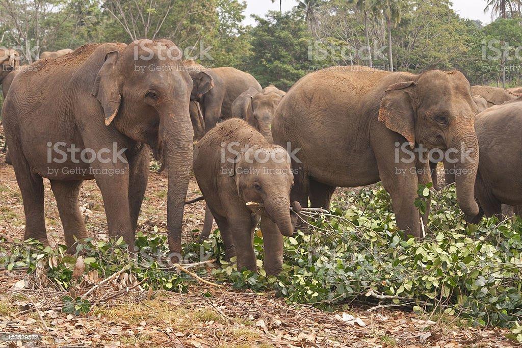 Feeding Time at the Elephant Orphanage royalty-free stock photo