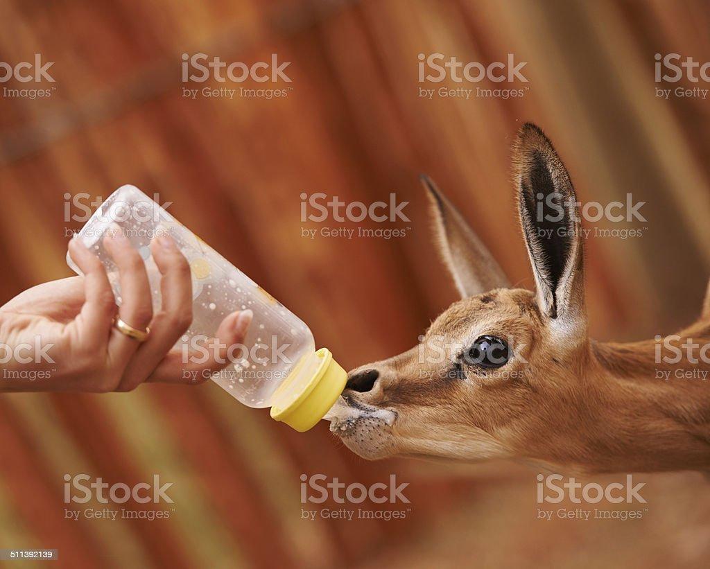 Feeding time stock photo